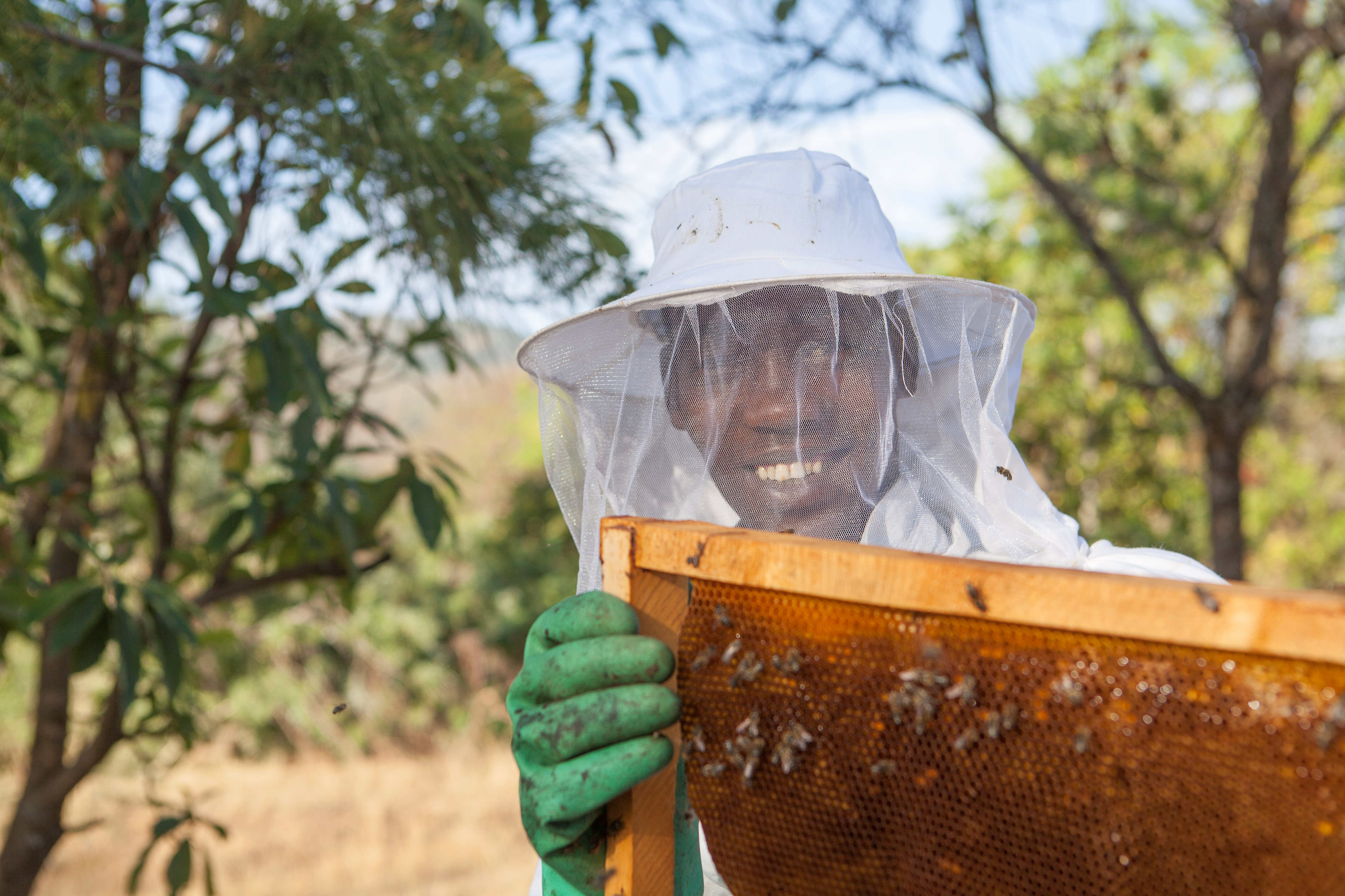 Honey and beeswax value chain analysis in tanzania