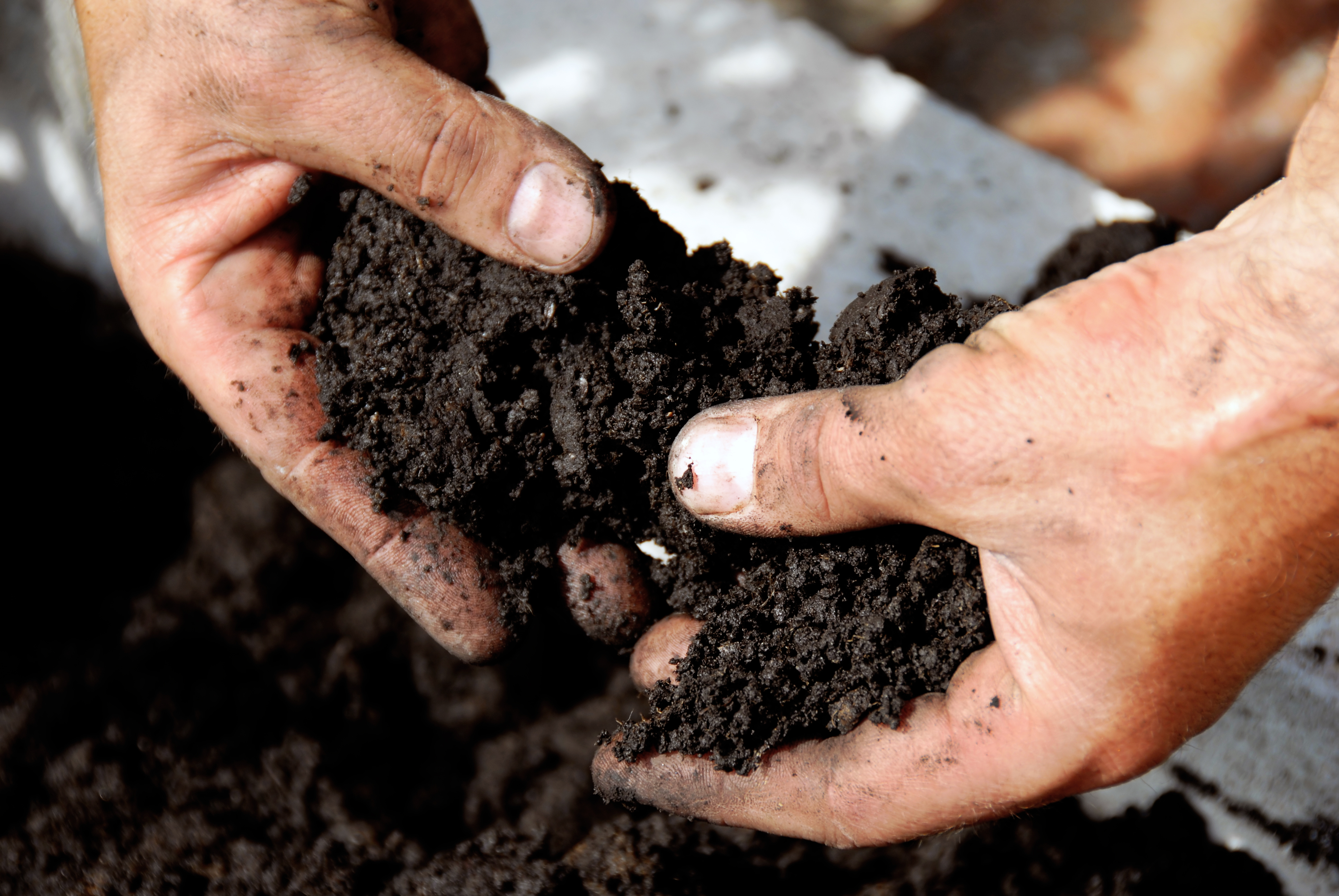 Hands in biosolids